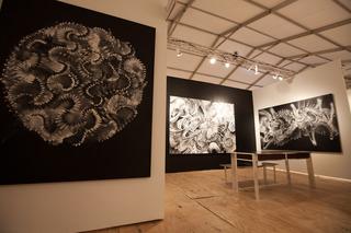 Untitled Paintings, Douglas Hoekzema