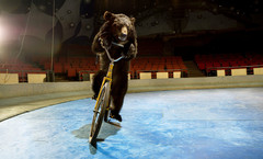 20121217225036-bear_one_on_bike_1024x1024