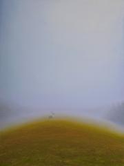 arborescent, John Sabraw