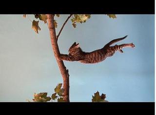 Hang In There, Jon Sasaki