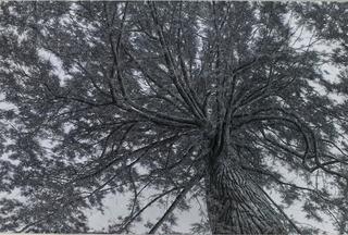 Lawerence Tree, Ellen Wagener