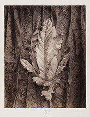 Group of Leaves on a Tulle Background,Charles Aubry