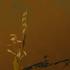 20130117000656-kdoner_wabisabi_ikebana