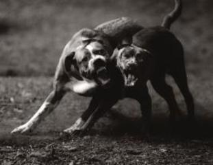 Dog Run #61, Michael Crouser