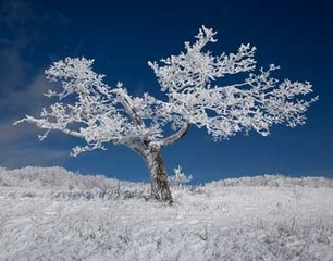 Ice Tree,Donny Teague