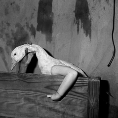 One Arm Goose, Roger Ballen