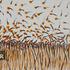 20130127005857-2012-12-8-polinizaci_n_en_el_campo