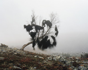 Wind\'s nest,