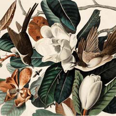 , John James Audubon