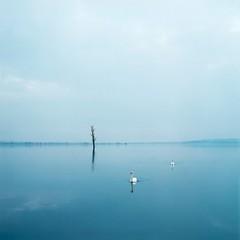 Untitled (Swans), Evžen Sobek
