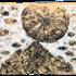 20130212225726-montagna_1994