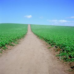 20130215002027-field_with_one_road