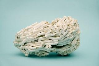 Coral, Emilie Halpern