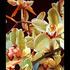 20130225043826-orchids