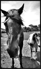 20130228031100-old_horse