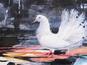 20130228201855-main_albino_pigeon