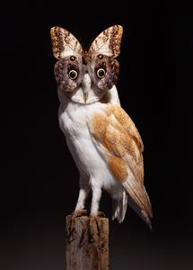 20130304201756-nancy-fouts-owl-butterfly2