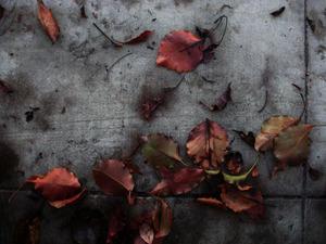 20130305013806-fallen_leaves