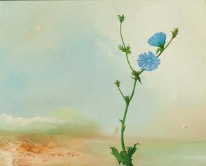 Haze, Lone Blossom, Thomas Frontini