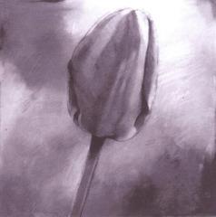 Tulip , Sally Wildman