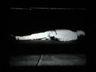 Levitation, Liz Harrison