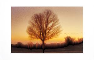 20130309175257-slurry_bare_tree