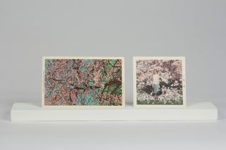 Blossom , Elisheva Biernoff