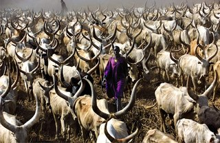 Dinka Herder in Purple Robe, South Sudan, Carol Beckwith & Angela Fisher
