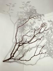 Tree , Alessandro Lupi