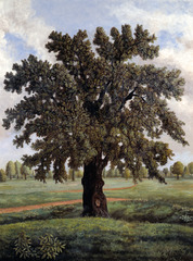 An English Oak Tree,