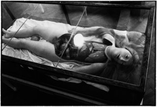 Wax Anatomical Mode, Zoe Leonard