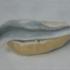 20130329154555-thomas-jueptner-ohnetitel-2013-40x50cm