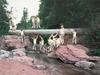 20130401190013-cobi_moules_untitled_fallen_tree_near_laverkin_creek_2013_2133_412