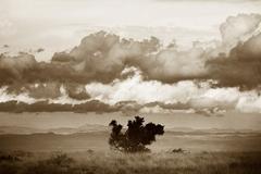 20130405170306-stuart_redler_mountain_zebra_-_low_res