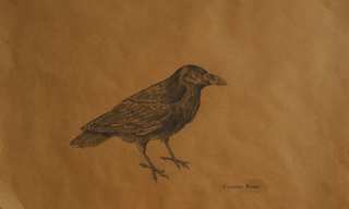 Common Raven,Liz Young