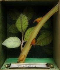 Earthsong (detail: Thorn), Kes Samuelson