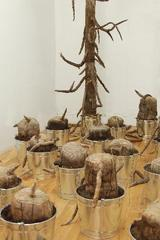 The Last Tree, Babs Reingold