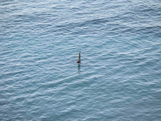 , Richard Misrach