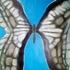 20130425165328-butterfly_mixed_media_on_paper_14x17_2013