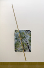 Ghost of a Tree, Installation view at Bemis Center for Contemporary Art, Omaha, NE , Letha Wilson