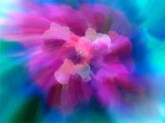 20130506133113-flower6