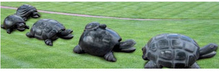 Turtle family, Lallan Singh