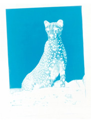 Blue Cheetah (Inverted Nude) , Jason Kalogiros