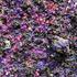 20130519121751-aguerra_ultraviolet_small