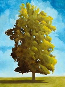 20130521003325-daytree1