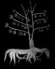 Voynich Botanical Studies Specimen 34v JARO, Miljohn Ruperto, Ulrik Heltoft Voynich