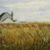 20130529033838-field_near_thury_en_valois__oil_on_linen_panel__18_22_x_24_22