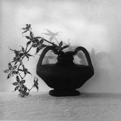 Orchids, Robert Mapplethorpe