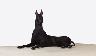 Untitled (Dog) , Peter Coffin