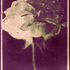 20130708180947-hard_rose